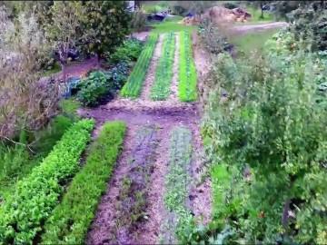 Mieux produire avec la permaculture - FUTUREMAG- ARTE